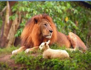 rsz_cgi_lion-lamb-2